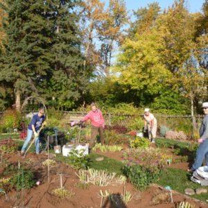 Revamping Cottage Garden