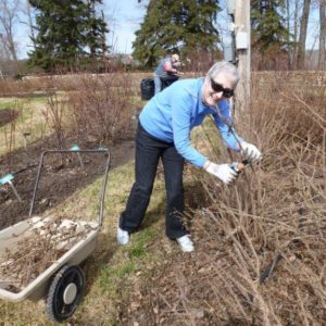 Spring cleanup in Rose Garden