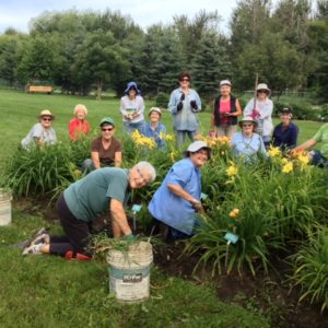 Work party in Daylily Bed