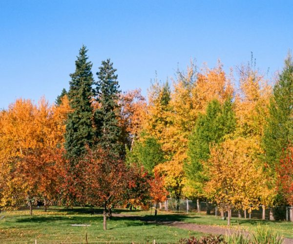 Fall Colours in the Park