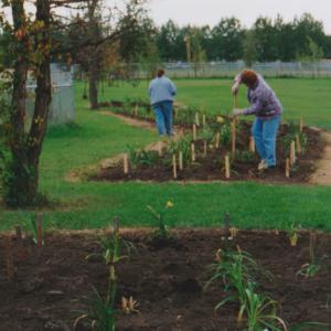 Planting Daylilies Fall 1995