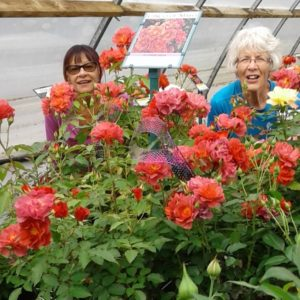 Volunteers love spending time in the greenhouse