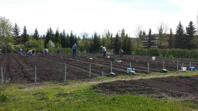 Trial Garden in June